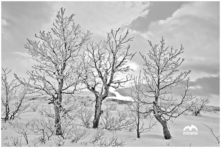 peavine mountain reno portrait photography